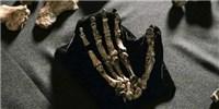 image: New Timeline for <em>Homo naledi</em>