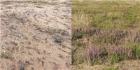 image: Donor-Soil Microbes Drive Ecosystem Restoration