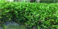 image: Image of the Day: Moss Effect