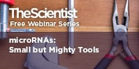 image: microRNAs: Small but Mighty Tools