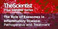 image: The Role of Exosomes in Inflammatory Disease: Pathogenesis and Treatment
