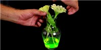 image: Image of the Day: Fluoresce to Impress