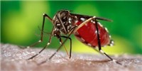 image: Florida Confirms First Cases of Local Mosquito-Borne Zika