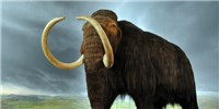 image: Study: Last Woolly Mammoths Died of Thirst