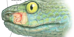 image: A Panoply of Animal Senses