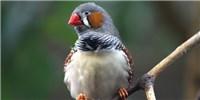 image: Birds Warn Unborn Chicks About Warmer Weather
