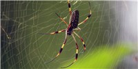 "image: Spider Silk ""Superlens"" Breaks Microscopy Barrier"