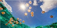image: Image of the Day: Jellyfish in the Sun
