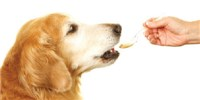 image: Pet Meds Adapted from Human Therapies