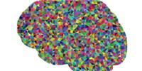 image: Do Brighter Species' Brains Emit Redder Light?