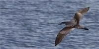 image: Birders Break North American Record