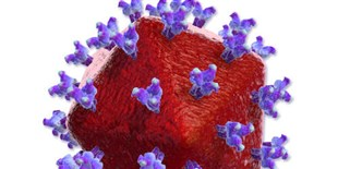 Broadly Neutralizing Antibodies in HIV Patients