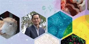Stem Cells Made Waves in Biology and Medicine