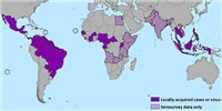 image: Who Is Immune to Zika?