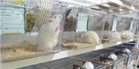 image: Assessing the Behavior of Lab Animals