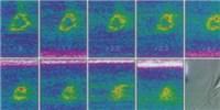 image: Two-Photon Microscopy's Historic Influence on Neuroscience