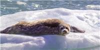 image: World Leaders Create Antarctic Marine Reserve