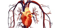"image: Genotyping ""Surrogates"" Misdiagnoses Deadly Heart Condition"