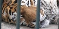 image: Mammals May Live Longer In Captivity