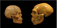 image: Evolution May Have Deleted Neanderthal DNA