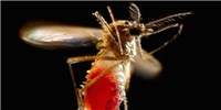image: Plan to Fight Zika with GM Mosquitoes Passes Popular Vote in Florida