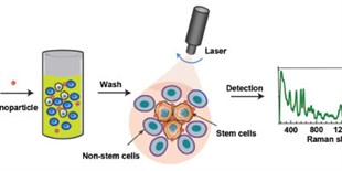 Using Raman Spectroscopy to Identify Cell Types