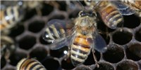 image: Image of the Day: Bee Trouble