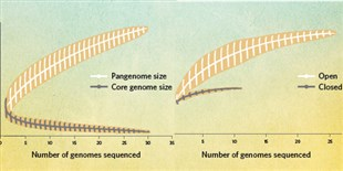 image: Infographic: Partioning the Genome