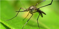 image: Researchers Propose Solution to Gene Drive Technology Problem