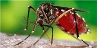 image: Texas Reports First Case of Suspected Mosquito-Borne Zika