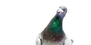 image: Slideshow: Nerdy Birdies