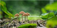 image: Psilocybin Decreases Depression and Anxiety in Some Cancer Patients