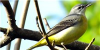 image: Study: There Are Twice as Many Bird Species as Previously Estimated