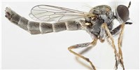 image: Image of the Day: New Fly in Town