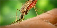 image: Scientists Confirm Zika's Link to Neurological Disorders