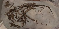 image: Long Egg Incubations May Have Doomed the Dinosaurs