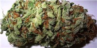 image: National Academies Detail the State of Weed Science
