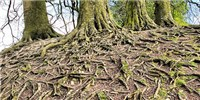 image: How Plant-Soil Feedback Affects Ecological Diversity