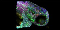 image: Image of the Day: Seeing in 5-D