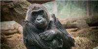 image: Image of the Day: Goodbye Colo