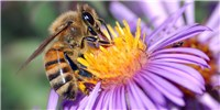 "image: Analysis: Industry-Funded Honeybee Study Was ""Misleading"""