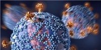 image: Unique Antibodies Open Path Toward New HIV Vaccines