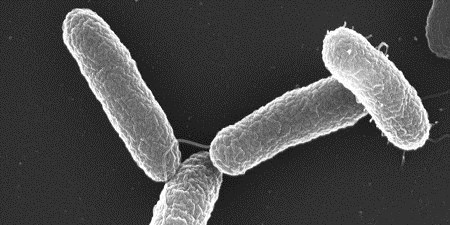 Toward Killing Cancer with Bacteria | The Scientist Magazine®