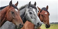 image: Study: Horses Did Not Develop New Traits During Periods of Rapid Speciation