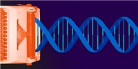 image: Broad Wins CRISPR Patent Interference Case
