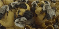 image: Image of the Day: Busy Bees