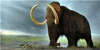 image: Hybrid Mammoth Embryo Coming Soon?