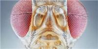 image: From Cricket Choruses to <em>Drosophila</em> Calls