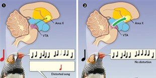 Infographic: Taking Note of Singing Errors