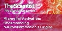 image: Microglial Activation: Understanding Neuroinflammation's Origins
